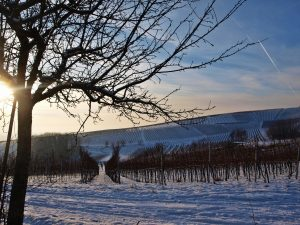 Winter in der Pfalz