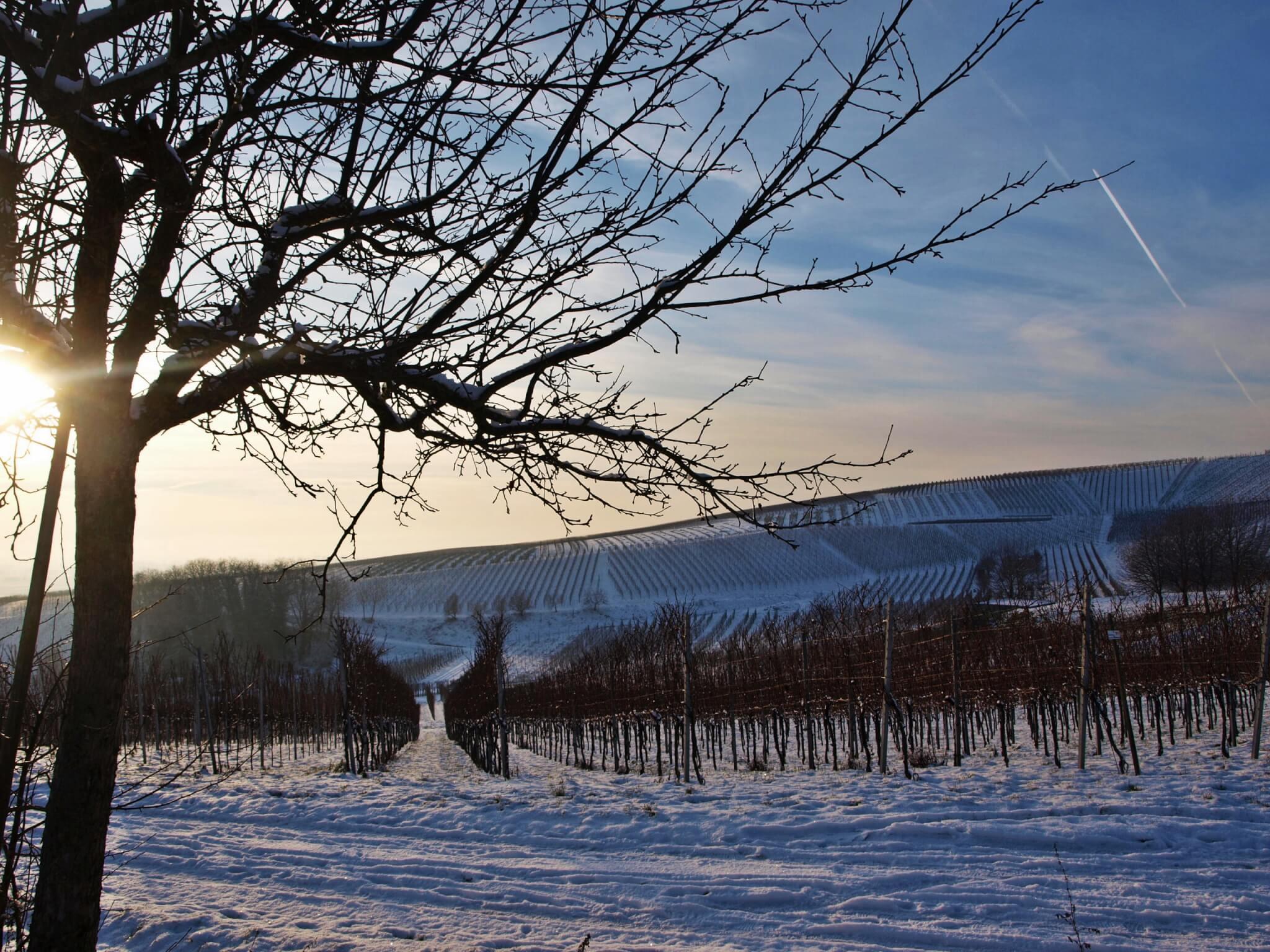 Winter in der Pfalz